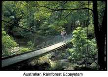 Australian_rainforest_2